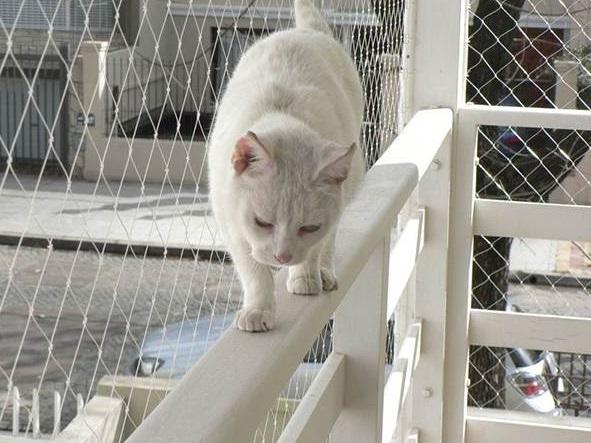 Balkon koruma sistemleri for Red transparente para gatos